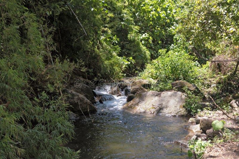 Petit courant en parc national Panama de Volcan Baru photographie stock