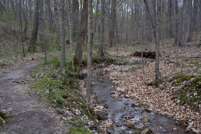 Petit courant près de sentier de randonnée images stock