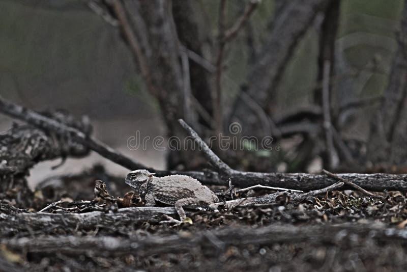 Petit dinosaur photographie stock libre de droits