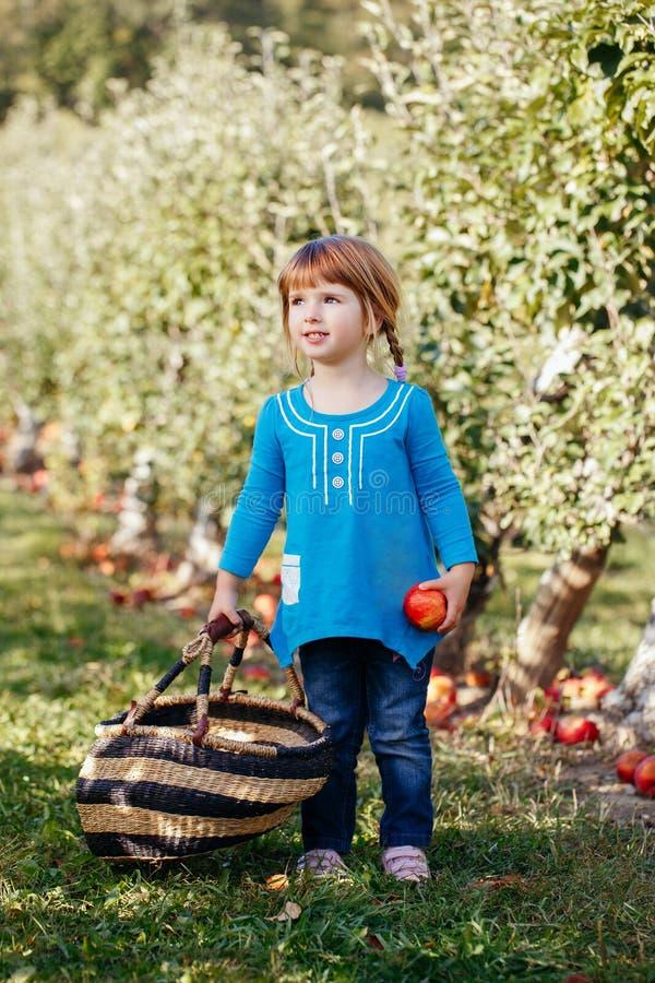 petit enfant caucasien roux adorable mignon de fille avec des yeux bleus sélectionnant des pommes dans le jardin à la ferme photo stock