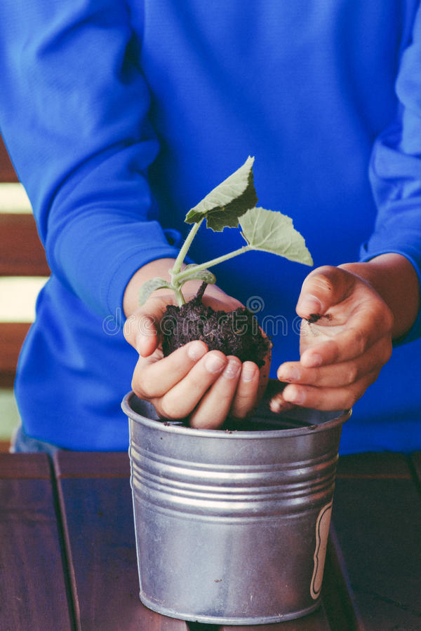 Petit enfant mignon retenant la plante verte dans des mains photos stock