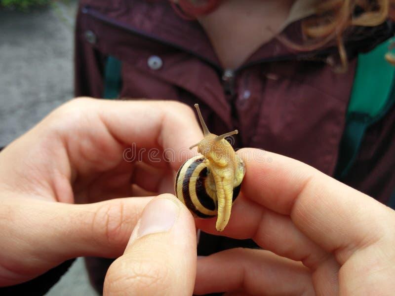 Petit escargot à Budapest image libre de droits