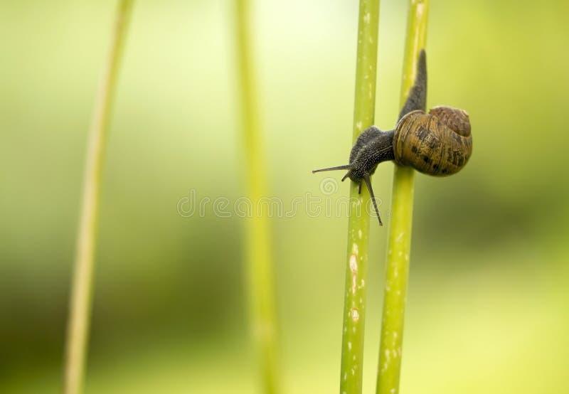 Petit escargot photos stock