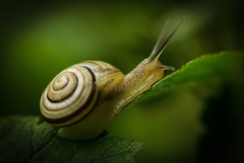 Petit escargot doux photos stock