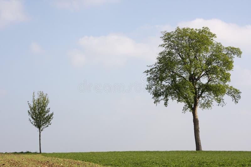 Petit et grand arbre photographie stock libre de droits