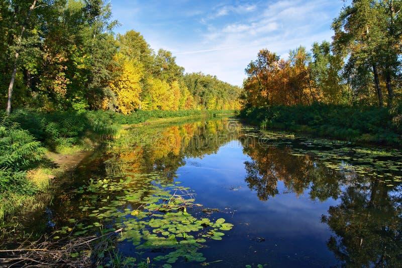 Petit fleuve dans la forêt à l'automne d'or photographie stock libre de droits