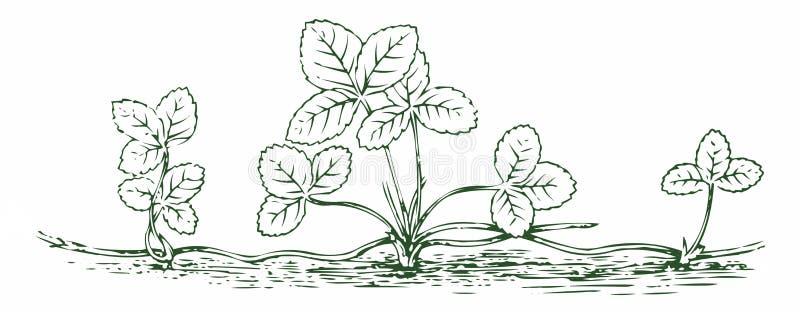 Petit fraisier illustration de vecteur