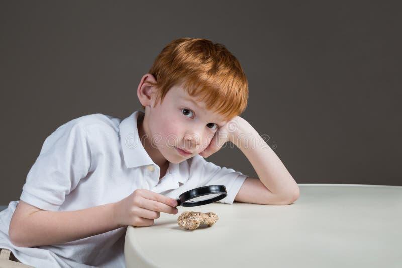 Petit garçon étudiant une roche par une loupe image libre de droits