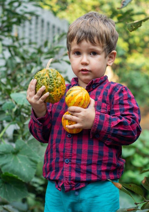 Petit garçon adorable ayant l'amusement sur une correction de potiron photo stock