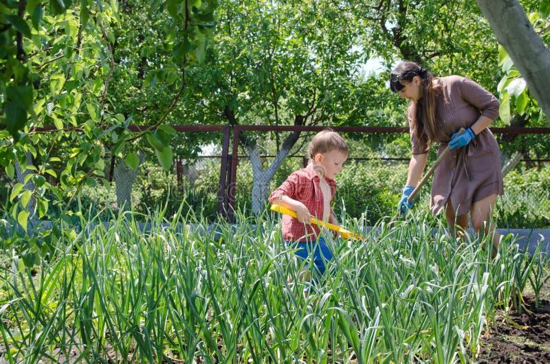 Petit garçon aidant sa mère dans le jardin images libres de droits