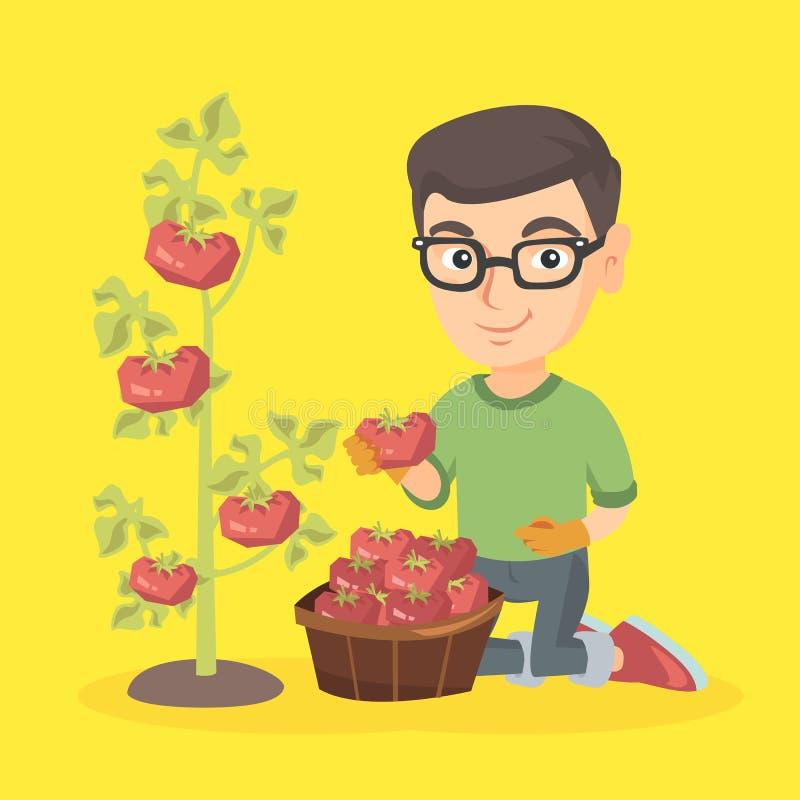 Petit garçon caucasien d'agriculteur moissonnant des tomates illustration libre de droits