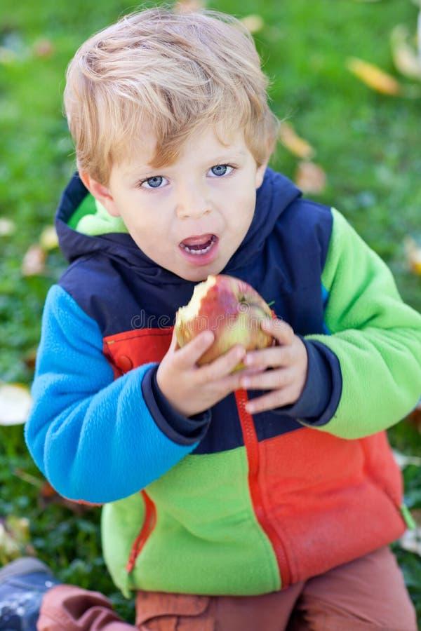 Petit garçon d'enfant en bas âge mangeant la pomme photos libres de droits