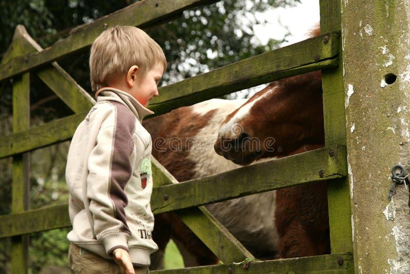 Petit garçon et cheval images libres de droits