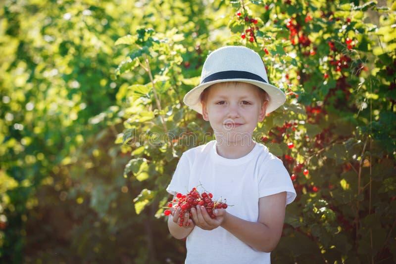 Download Petit Garçon Heureux Tenant Une Groseille Rouge Dans Un Jardin Image stock - Image du baie, bonheur: 56475537