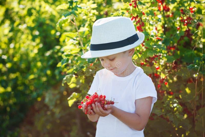 Download Petit Garçon Heureux Tenant Une Groseille Rouge Dans Un Jardin Image stock - Image du beau, gosse: 56476077