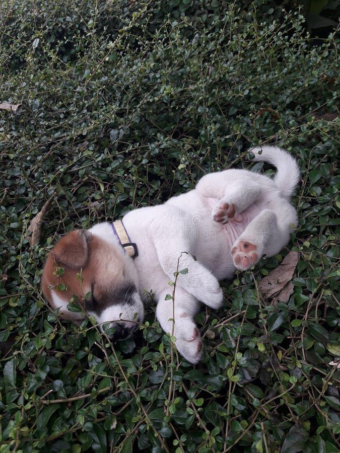 Petit garçon mignon sur le buisson photo stock