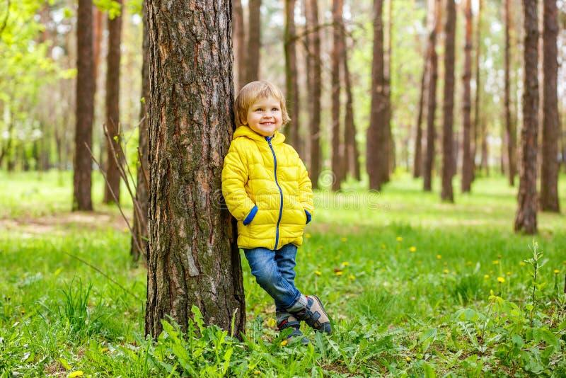 Petit garçon se tenant près du tronc d'un pin en parc photographie stock libre de droits
