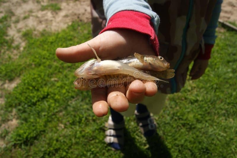 Petit garçon sur la pêche photos libres de droits