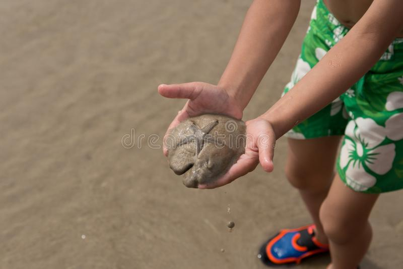 Petit garçon tenant des étoiles de mer sur la plage photos libres de droits