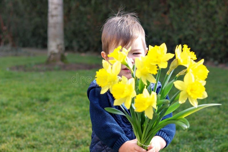 Petit garçon timide mignon dans le gilet bleu tenant et donnant le bouquet des fleurs jaunes lumineuses de jonquilles cachant son photos libres de droits