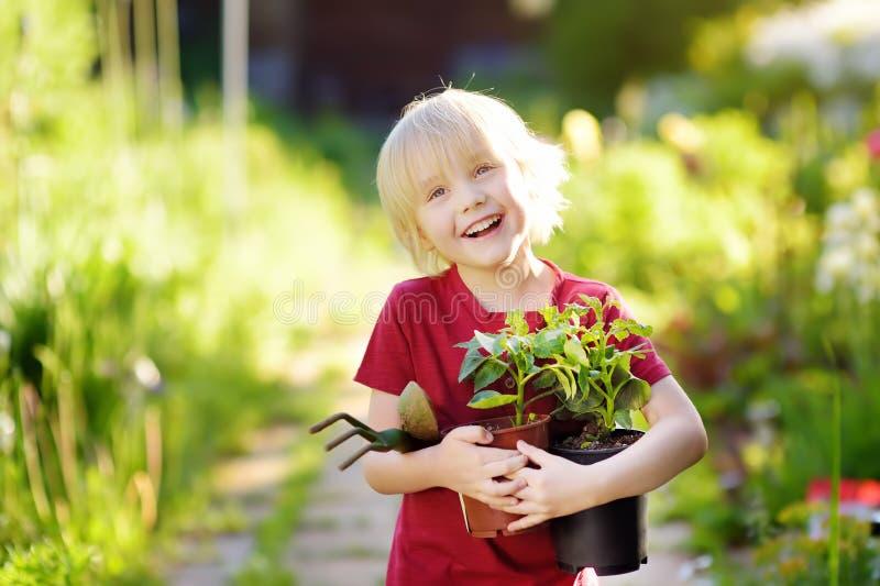 Petit gar?on tenant la jeune plante dans des pots en plastique sur le jardin domestique au jour ensoleill? d'?t? image libre de droits