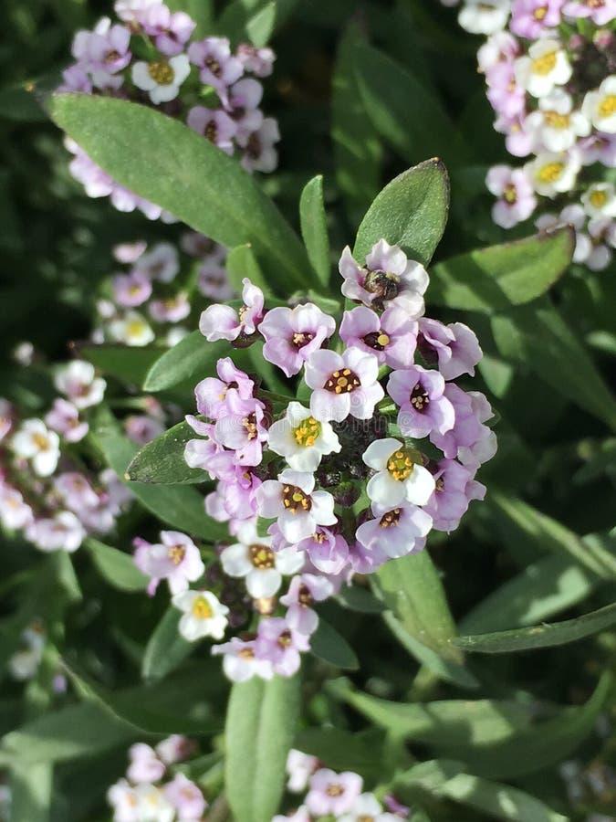 Petit groupe de petites fleurs images stock