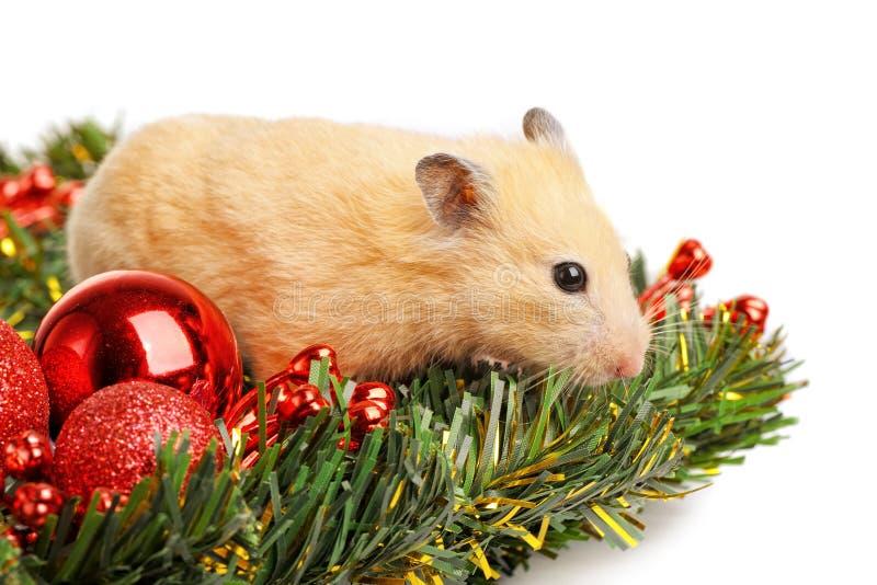 Petit hamster drôle photos stock