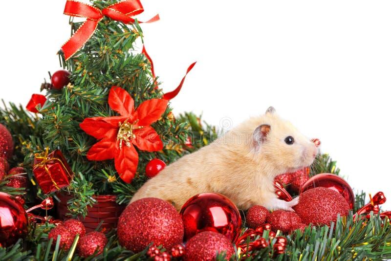Petit hamster drôle images stock