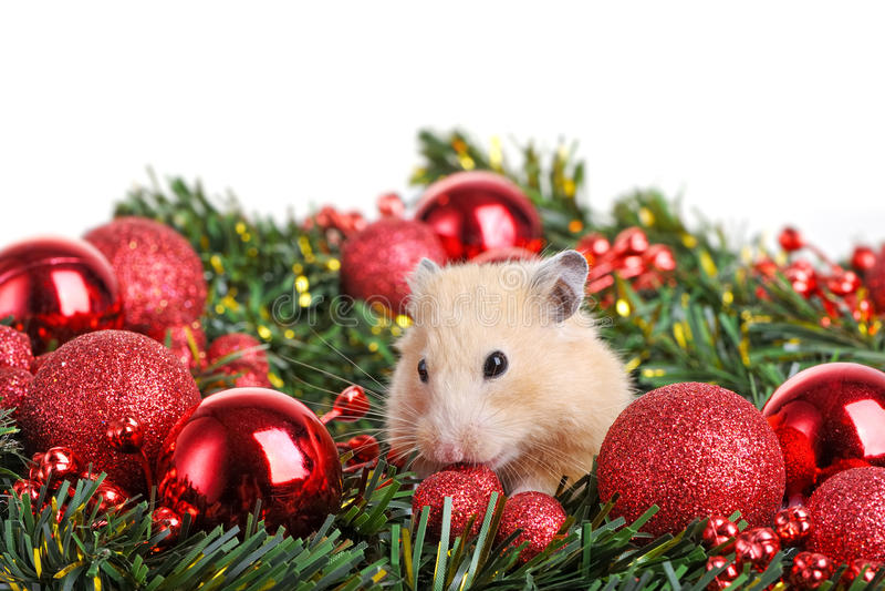 Petit hamster drôle image stock