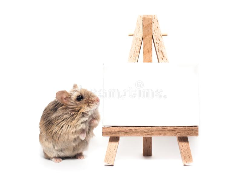 Petit hamster velu mignon de campbell de nain dans un studio près d'un chevalet avec l'espace blanc de copie photos stock
