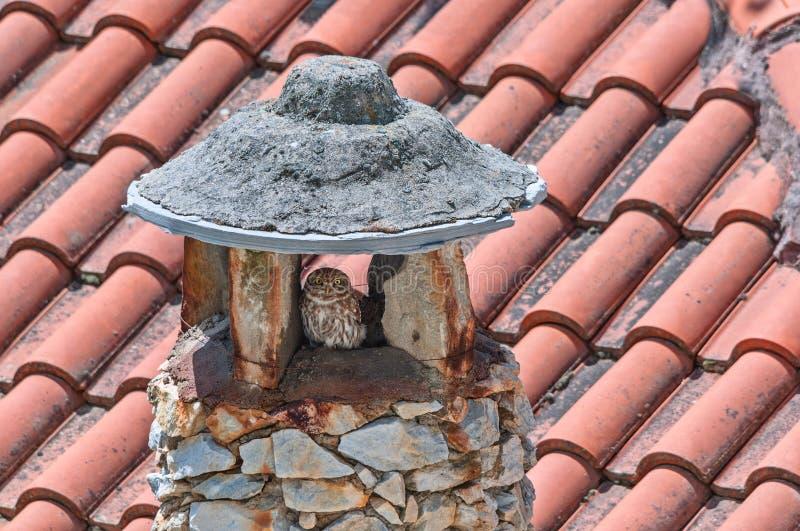 Petit hibou sur une cheminée en pierre image libre de droits