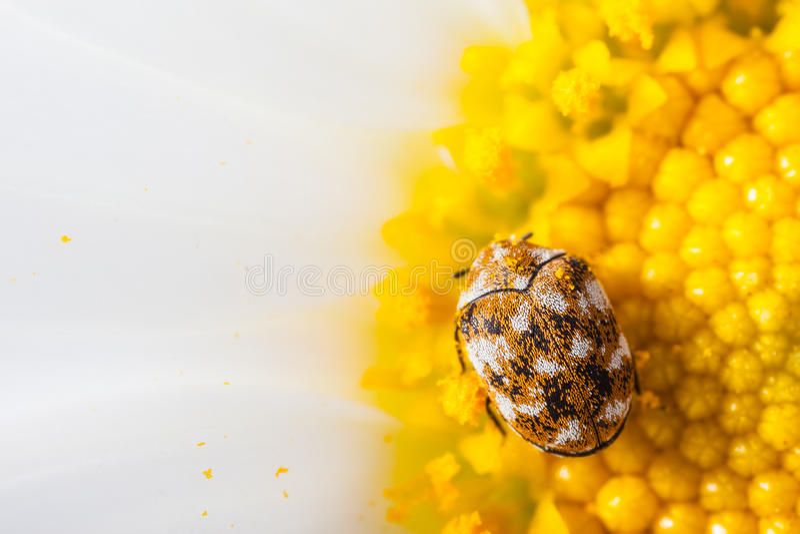 Petit insecte photographie stock libre de droits