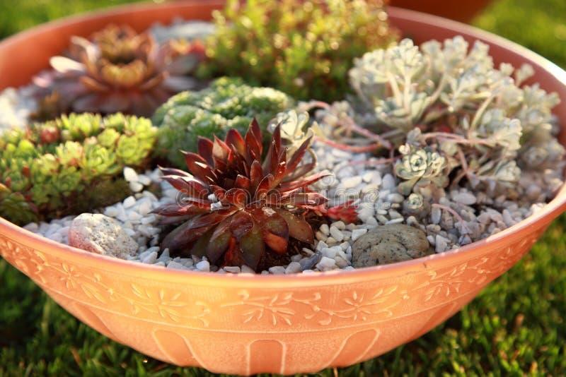 Petit jardin de roche photo stock
