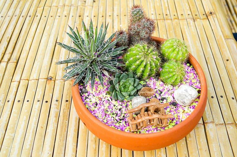 Petit jardin sur le plateau photo stock
