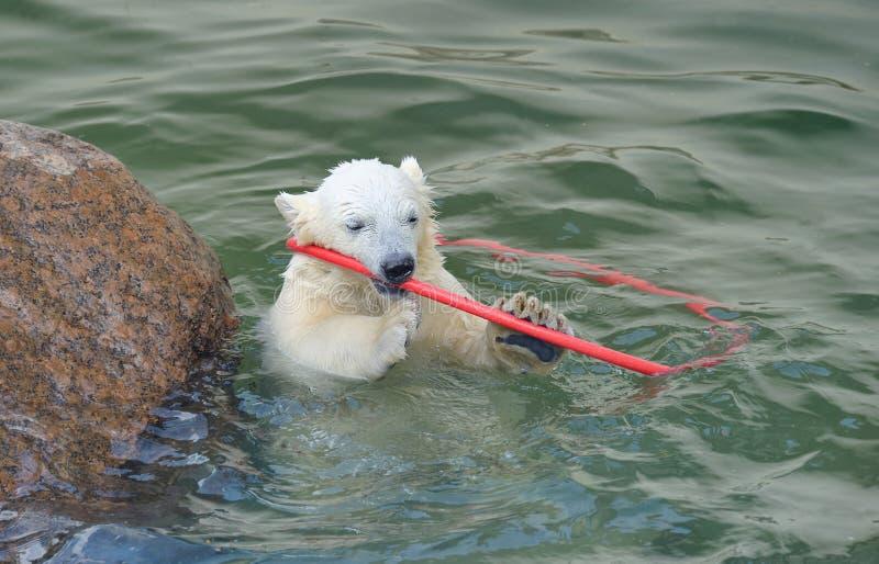 Petit jeu blanc d'ours blanc images stock