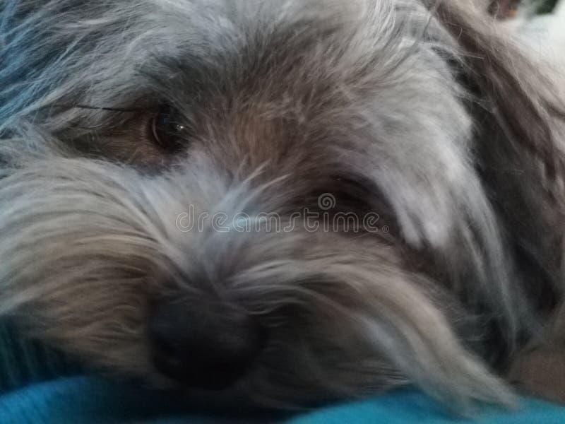 Petit joli visage de Doggy photos libres de droits