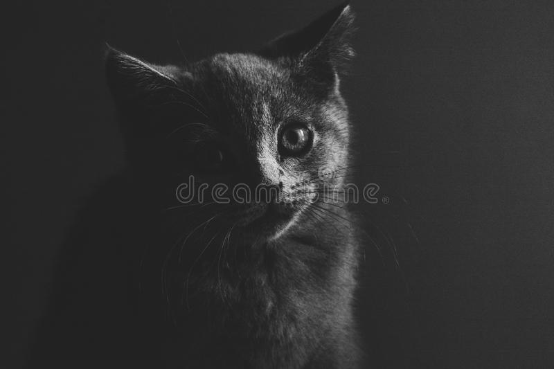 Petit Kitty photographie stock