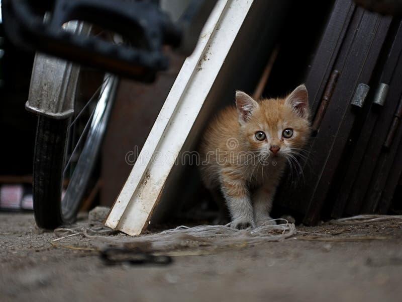 Petit Kitty photos libres de droits