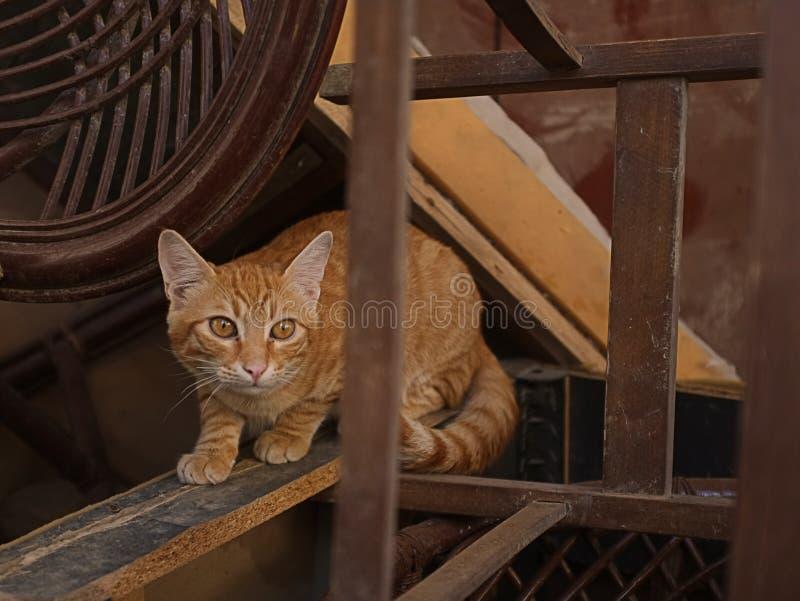 Petit Kitty image stock