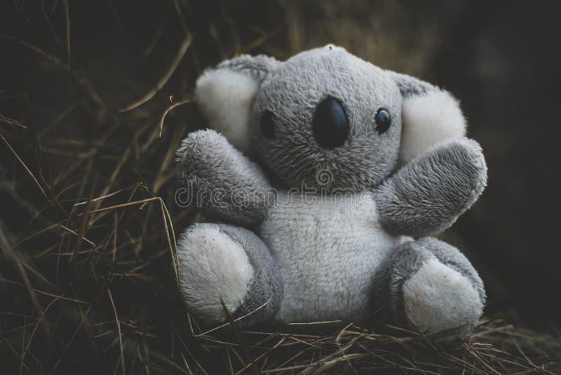 petit koala photographie stock libre de droits