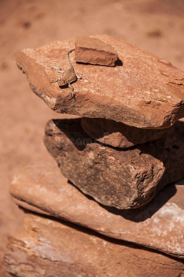 Petit lézard sur le cairn en pierre - Hunter Canyon Hiking Tr photos libres de droits