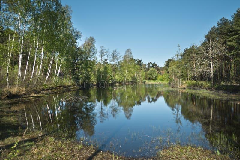 Petit lac dans la forêt - Otwock, Pologne photo libre de droits