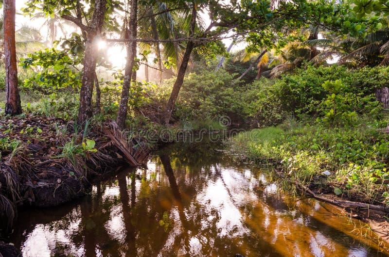 Petit lac entouré par la verdure et les arbres Rayons solaires passant par les arbres photos stock
