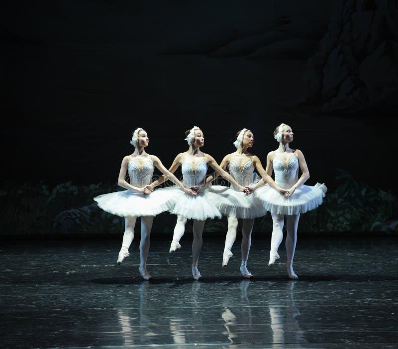 Petit lac swan de Lakeside-ballet de cygne du cygne-Le quatre photo stock
