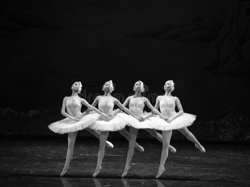 Petit lac swan de Lakeside-ballet de cygne du cygne-Le quatre photographie stock