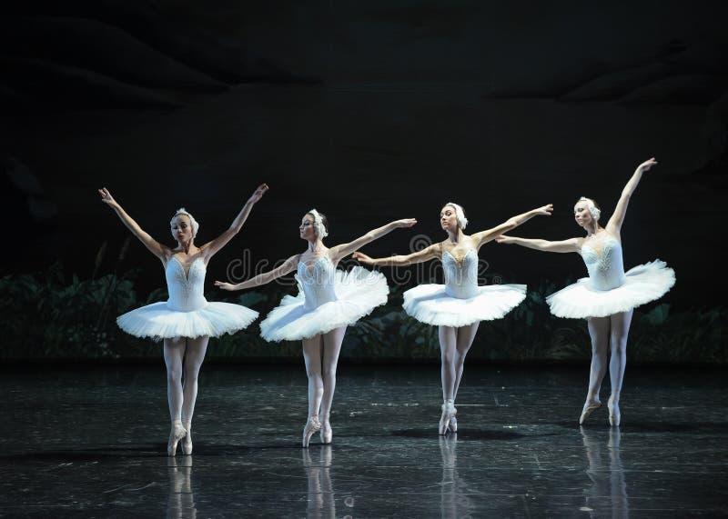 Petit lac swan de Lakeside-ballet de cygne du cygne-Le quatre image libre de droits