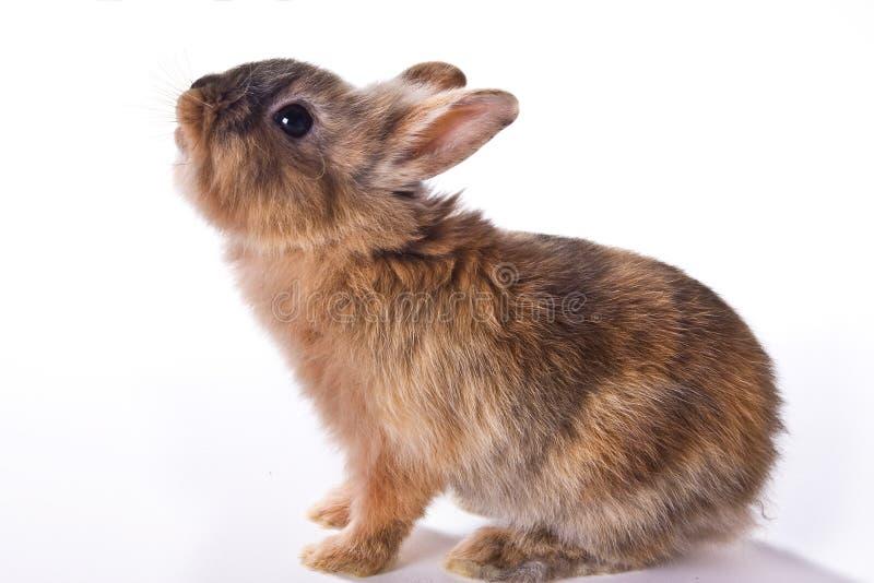 Petit lapin curieux images libres de droits