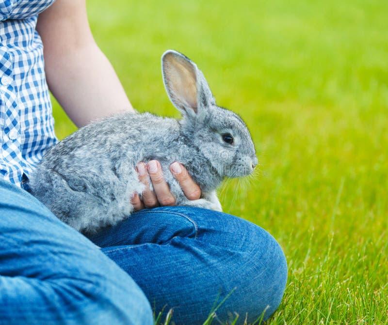 Petit lapin gris mignon dans les mains d'un woamn sur l'herbe verte b photographie stock