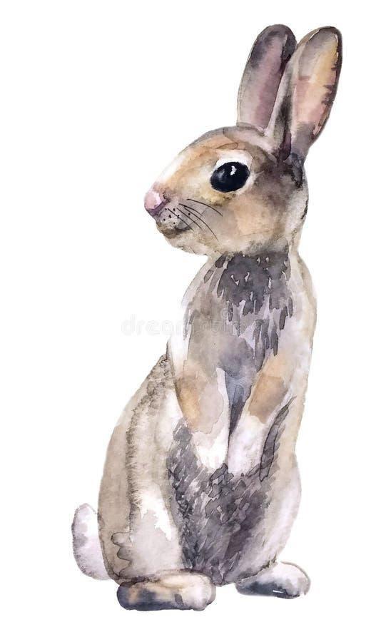Petit lapin gris pelucheux mignon illustration de vecteur