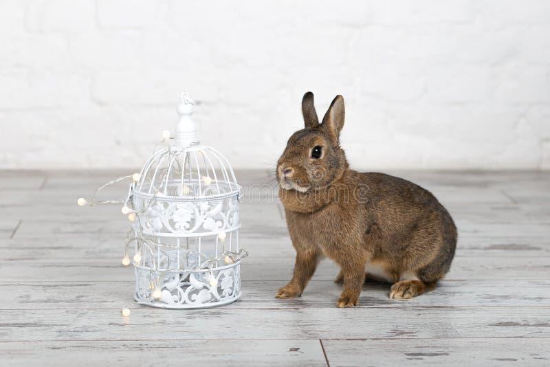 Petit lapin mignon se reposant près de la cage à oiseaux photographie stock